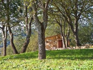 Boschetto di querce della casa vacanze la Carraia
