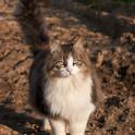 Foto di gatto