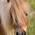 Foto di un pony