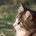 Foto di un gatto dell'agriturismo Poggio Diavolino