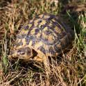 Foto di tartaruga in agriturismo a Suvereto