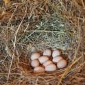 Foto di uova in agriturismo a Suvereto