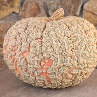 La zucca gallosa Giraumon d'Eysines: ornamentale e deliziosa