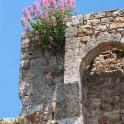 Foto di fiori sulle mura di Massa Marittima