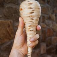 La pastinaca gemma bianca, varietà rustica per suoli pesanti
