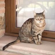 Mimì e Cocò: come una mamma salvò la vita della sua gattina