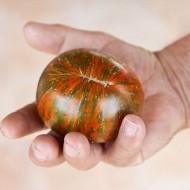Un caleidoscopio di colori: il pomodoro Chocolate Stripes