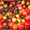 Le verdure antiche, quali sono e perché coltivarle, su inorto.org