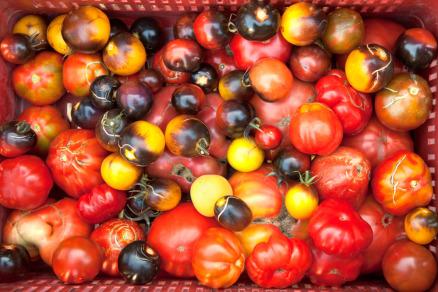 Foto di pomodori antichi e moderni
