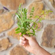 Curare gli animali con le erbe: l'erboristeria veterinaria di GreenVet