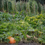 Come coltiviamo le nostre verdure (quasi) senz'acqua su inorto.org